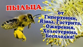 чем полезна пыльца