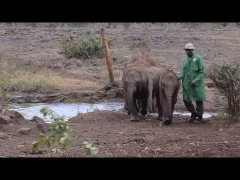 funny baby elephant fail