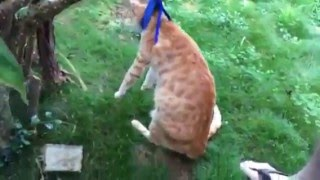 cat harness fail