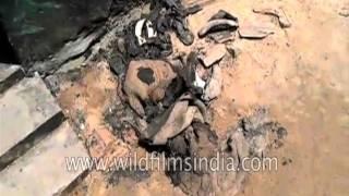 Wife burns man, 6 of his kin to death in Tamil Nadu
