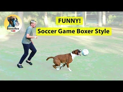 Soccer Game Boxer Style! 😂 FUNNY!