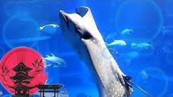 Maailman suurimmassa akvaariossa! | Joona Japanissa