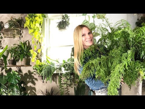 14 ESSENTIAL INDOOR PLANT CARE TIPS   HOUSEPLANT SUCCESS MADE SIMPLE!