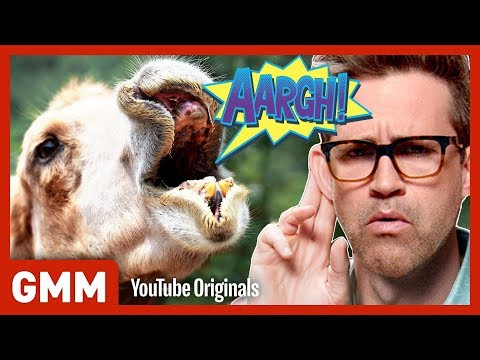 5 Animal Mating Calls (GAME)