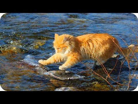 Смешные Кошки 2016! (#10) Веселая Видео Подборка! Смешные Животные 2016/