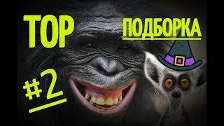 ПРИКОЛЫ С ЖИВОТНЫМИ 2019 ТОР ПОДБОРКА 2
