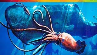 #115 Sự Thật Nổ Não SS022E16-20: Mực Kraken - Quái Vật Trong Truyền Thuyết 😱😱😱