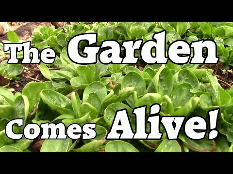 The Garden Comes Alive: An Early Spring Under Cold Frames & Hoop Houses