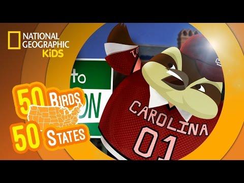 South Carolina - Feat. Rappers MC Wren the Wren and Wild Bill the Wild Turkey | 50 BIRDS, 50 STATES