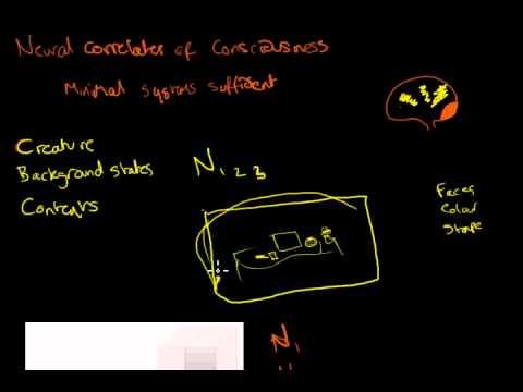 06 Neural Correlates 1
