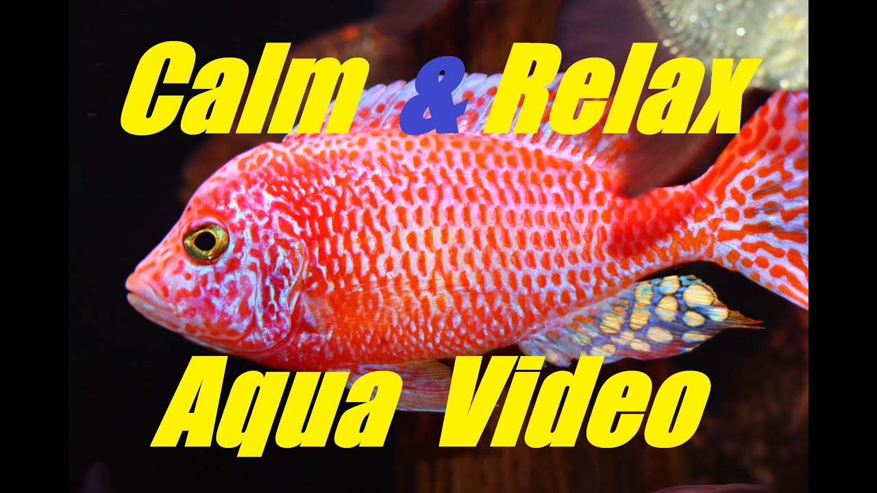 Fish Tank Video 1 Hr of Calm Relaxing Peaceful and Soothing