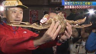 過去最高の500万円・・・鳥取でズワイガニ初競り(19/11/07)