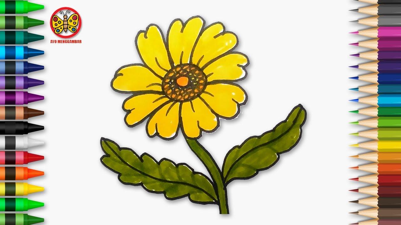Cara Menggambar Dan Mewarnai Bunga Daisy Untuk Anak Tk Paud Dan Sd Youtube