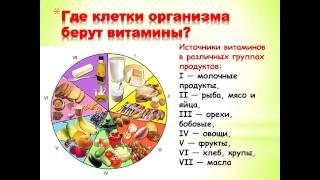 3- Живые витамины Эраконда