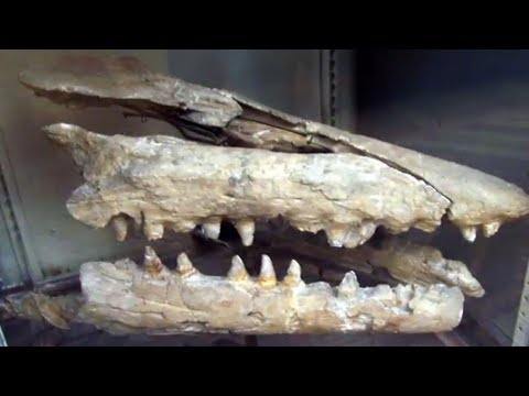 17 Terrifying Creatures Mistaken For Dinos