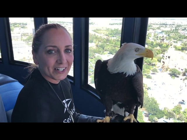Sea World Orlando Sky Tower Bald Eagle ~ Bird's Eye View