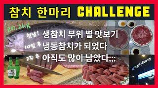 노량진수산시장 20.2kg 참치 한마리 3주 동안 먹기…