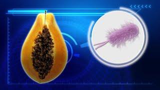 Salmonella outbreak linked to papayas kills one