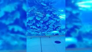 Gala-Dubai Mall Aquarium part …