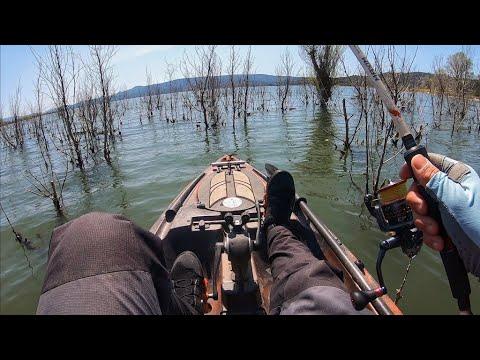Fishing BUSHES For Spawning Bass (Lake Berryessa)
