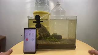 How to Make Air Pump for Fish Tank with Gallon Bottles | Time Efficiency?