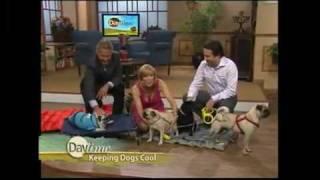 Kakadu Pet Visits Daytime - David Brown On Daytime With The Pug