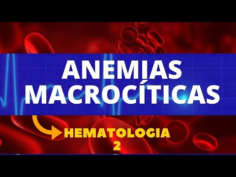 anemias-macrocÍticas---hematologia-2