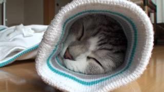 袖の中で眠るネコ thumbnail