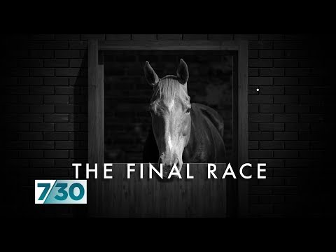 The Dark Side Of Australia's Horse Racing Industry | 7.30