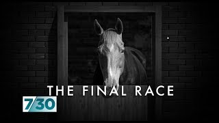 The dark side of Australia#39s horse racing industry 7.30