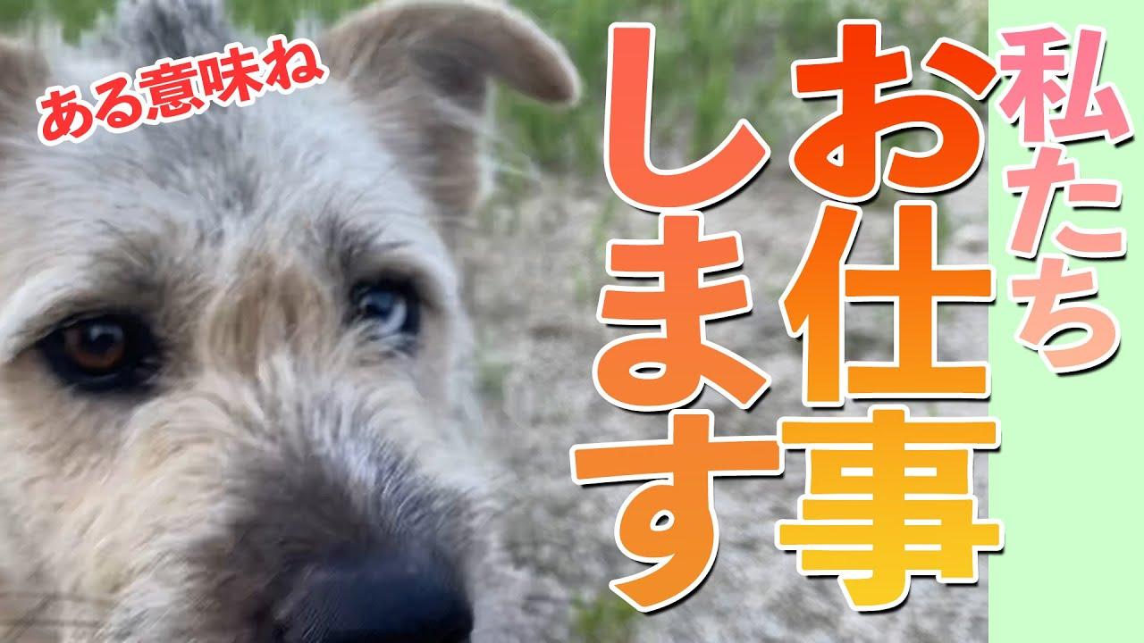 #166【試行錯誤】吉見の現場で犬達が検証!
