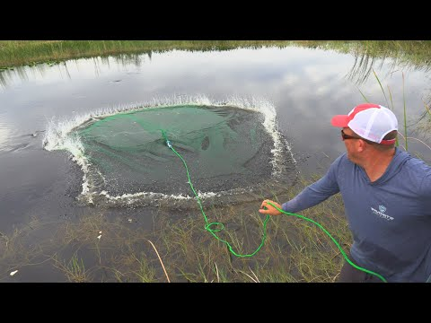 Cast Netting 1000's of fish!!! {How To Castnet}