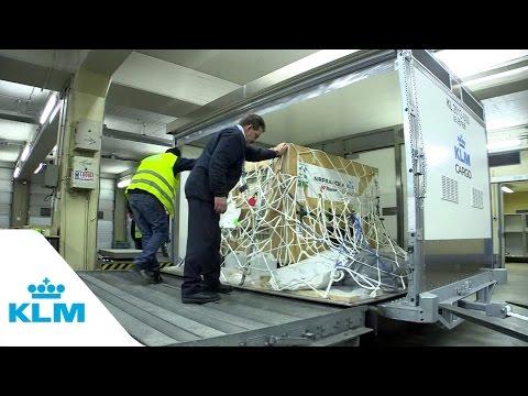 KLM Transports Panda To Chengdu (China)
