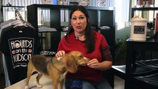 How To Stop A New, Bigger Puppy From Pouncing : Dog Training Tips