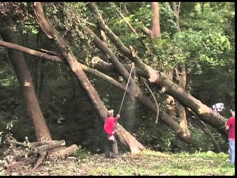 Storm Damage Tree Cutting and Cleanup - Stoltzfus Tree Service