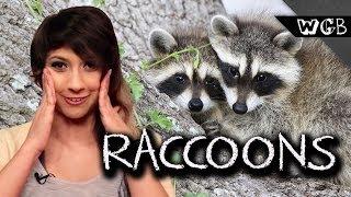 Raccoons Are Weird, Gross & Beautiful