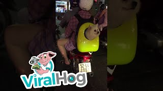Puppy in a Backpack || ViralHog
