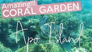 Apo Island CORAL GARDEN, Philippines (2018)