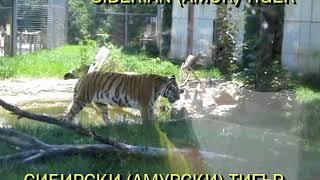 Big Cats in Sofia Zoo | Krisi and Marty Tour | Зоопарк София | Криси и Марти при големите котки