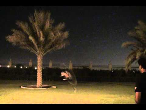 Outrage Fusion 50 night flying test by Tareq