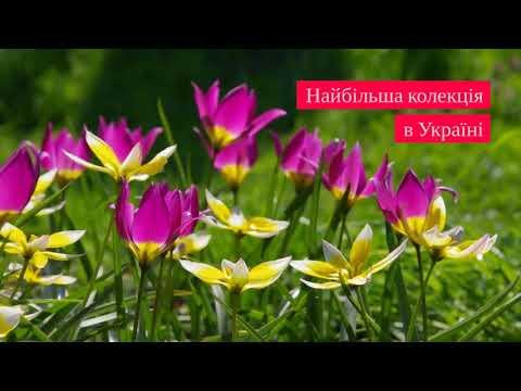 Найбільша колекція тюльпанів в Україні!