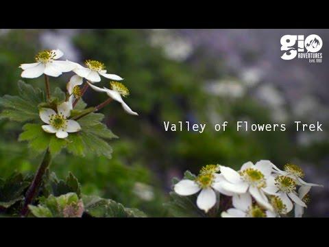 Jewel in the Himalayas - Valley of Flowers Trek - (I)