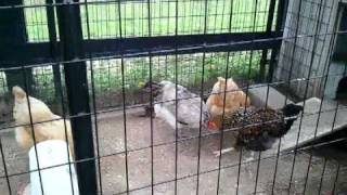 Our Playhouse Chicken Coop For Sale