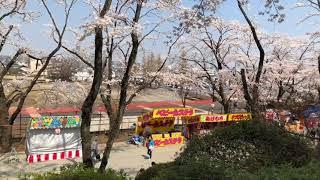 八王子富士森公園の桜祭りの様子 18/03/28