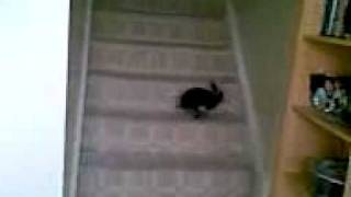 Mr bumble falls down the stairs.3gp