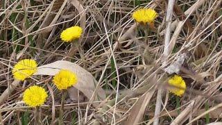 Природа в середине марта. Nature in mid-March.