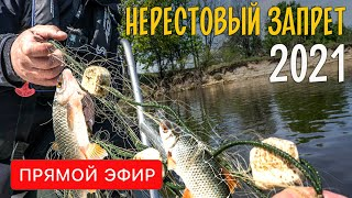НЕРЕСТОВЫЙ ЗАПРЕТ 2021 Разрешенные места ловли запрещенные снасти и работа рыбоохраны Прямой эфир