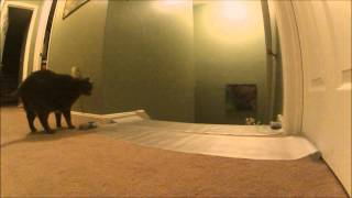 Scat Mat ~ Pip & Munchkin