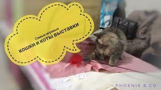 Выставка кошек и котов. Киев. 17-18 февраля 2018