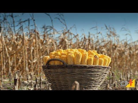 Clique e veja o vídeo Curso a Distância Produção de Milho em Pequenas Propriedades - Armazenamento - Cursos CPT